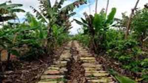 O que é Agricultura Sintrópica?